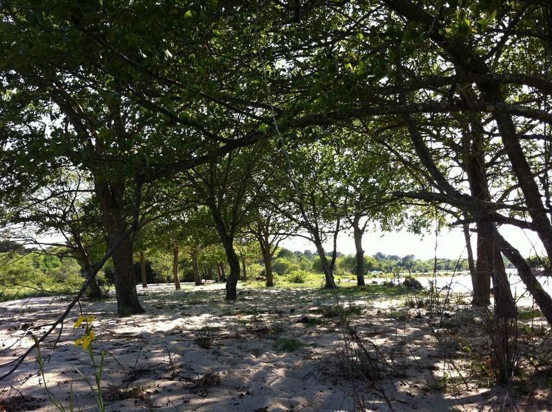 louer un mobil home dans le camping les pres verts à gastes dans les landes