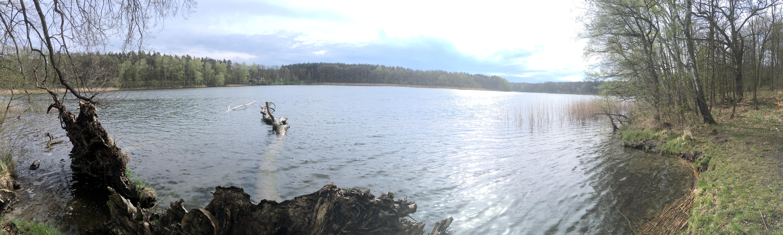 Baden, schwimmen, Badesee in Brandenburg, märkisch oderland, oderbruch