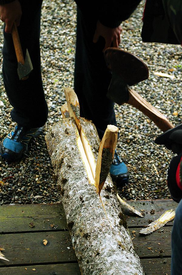 Fendage du tronc de frêne