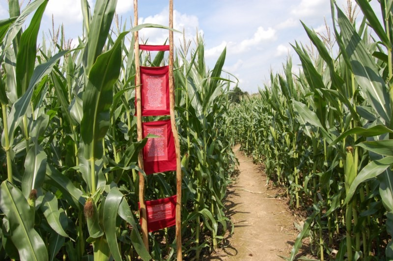 Nicole's Siegerbeitrag im Maislabyrinth