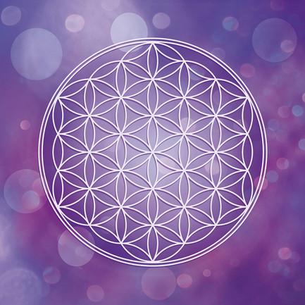 Blume des Lebens in Violett