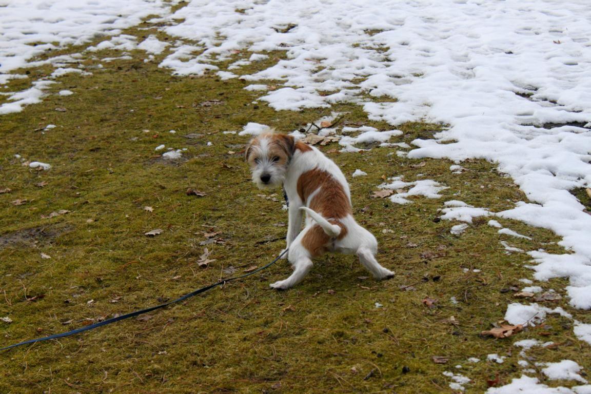 Nicht weglaufen, währen ich Pipi mache!