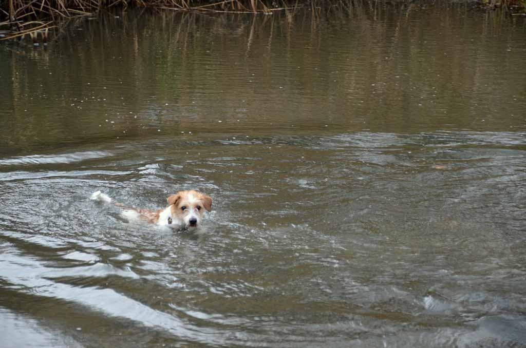 ... und schwamm trotz frischer Temperaturen!