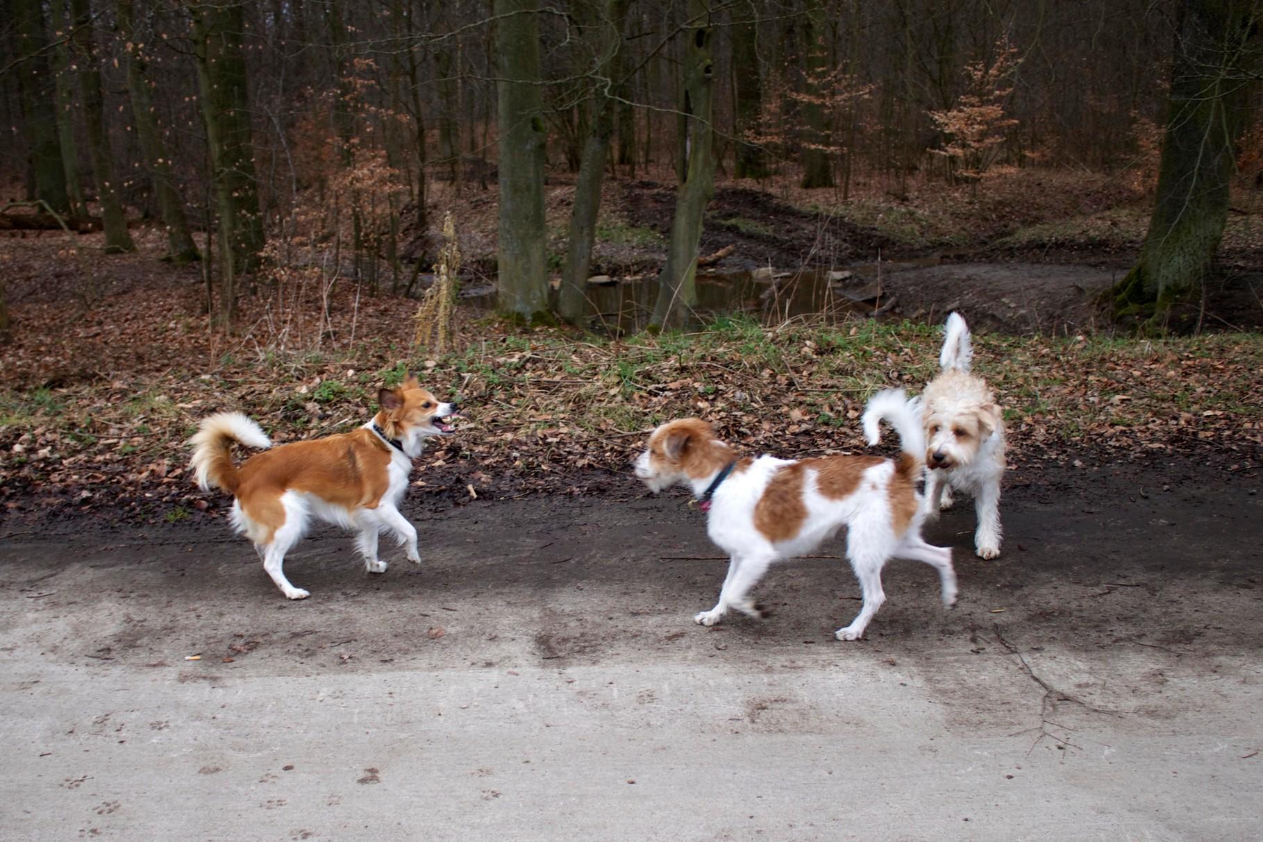 Baila, Kabou & Benny