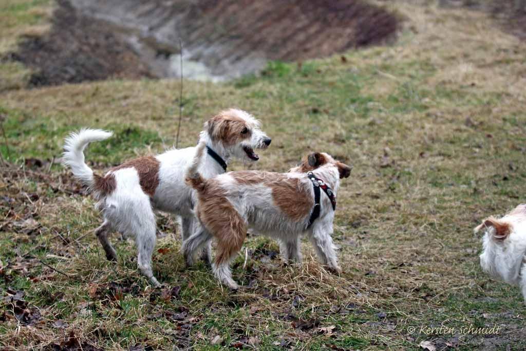 Kabou & Eyla (Jette)