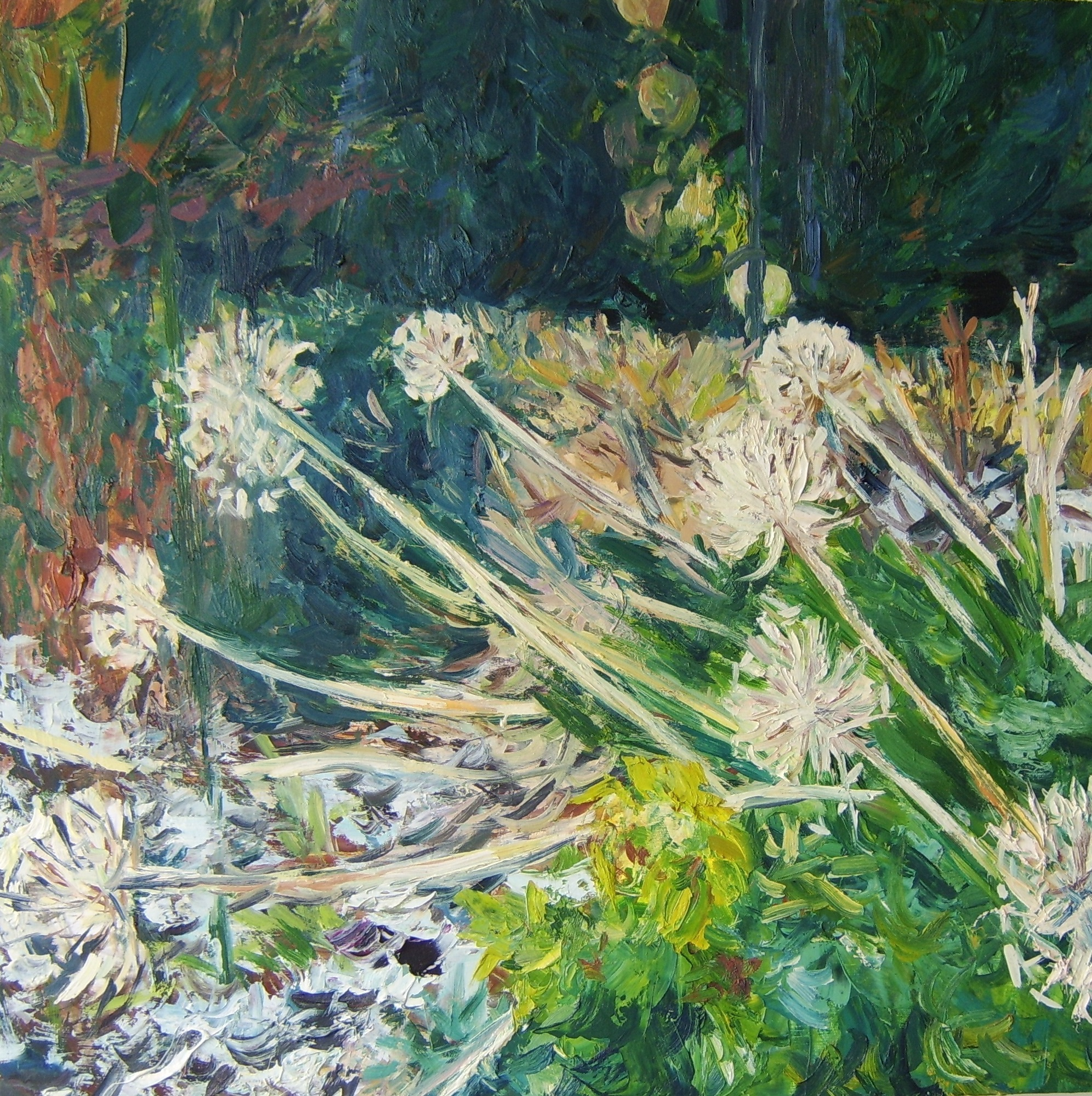 Agapanthus seed heads, trace of snow 76x76cm