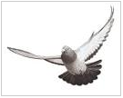 Klick auf die Taube