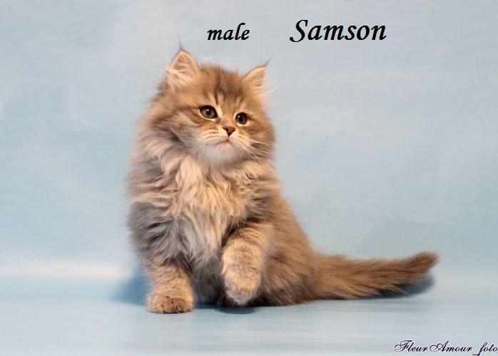 Samson a 2 mesi in Russia. Mi sono innamorata di lui da questa fotografia.