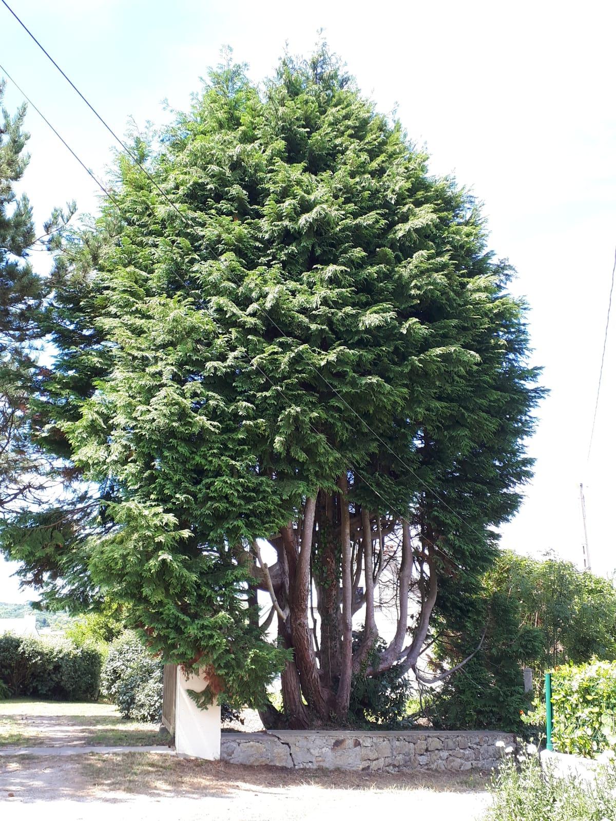 L'arbre curieux