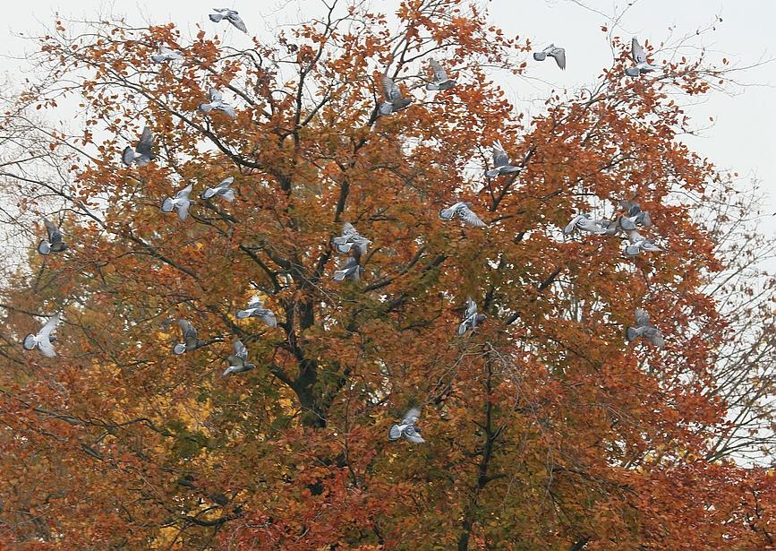 Die Tauben - Symbole des Friedens - begleiten die Zeremonie in der Luft.