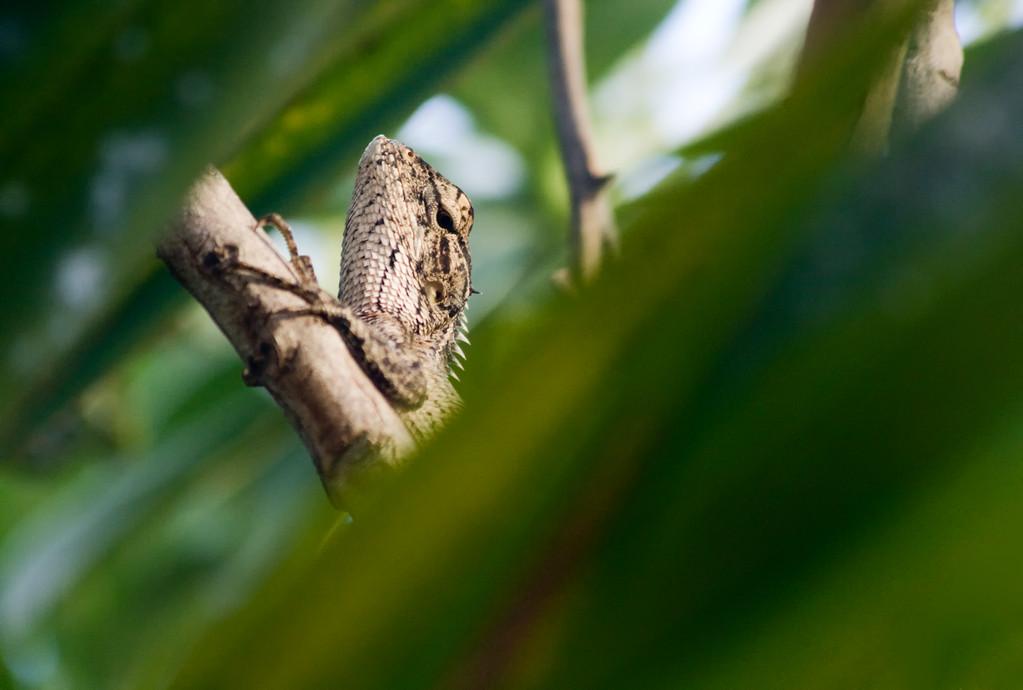 · mauritius · wildlife· yak © 2010 RK