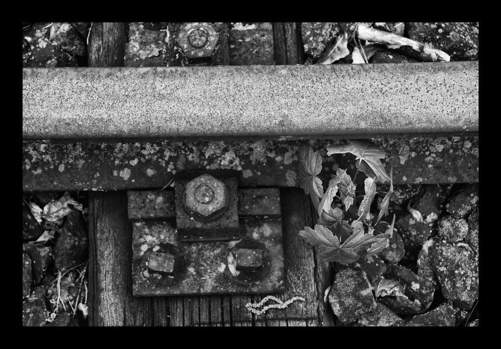 · grenzau · 2008-05-24-032 · yak © 2010 RK