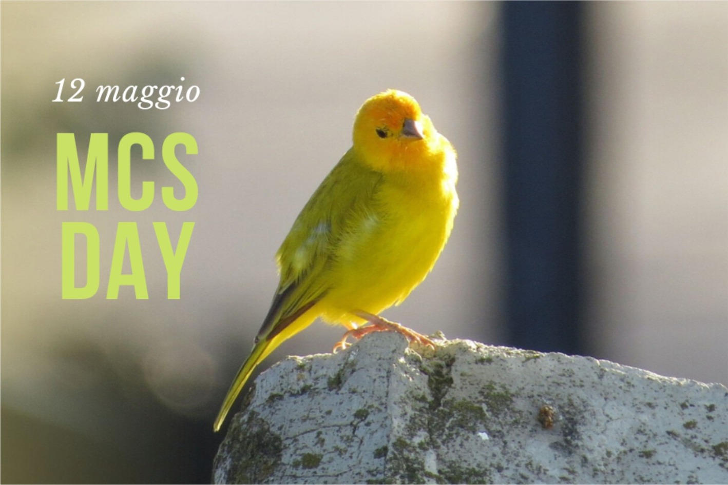 12 maggio Giornata internazionale della consapevolezza della MCS