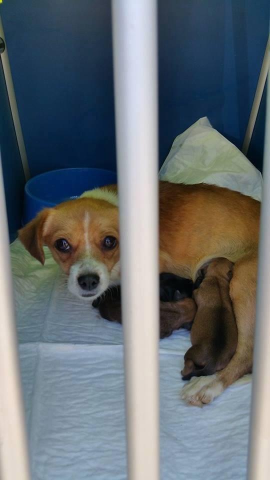 Lila mit den Babies nach der Rettung
