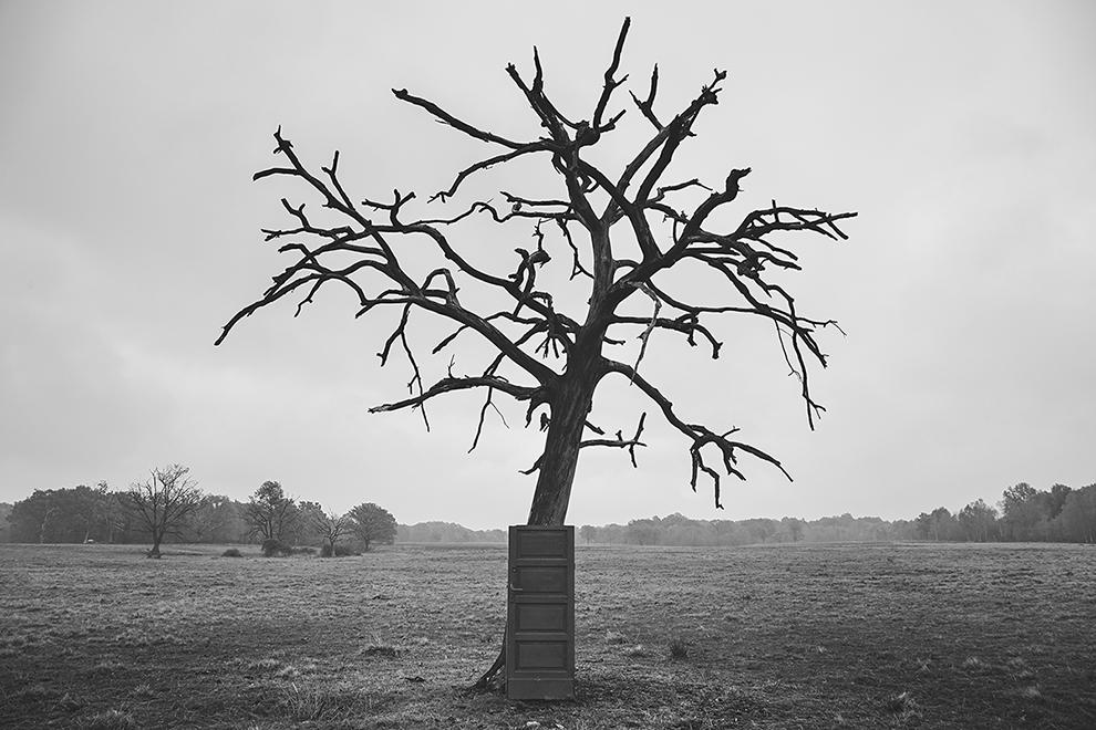 Dead tree door