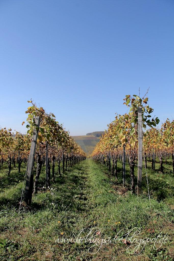 Weinberge an der Mainschleife Weininsel Sommerach