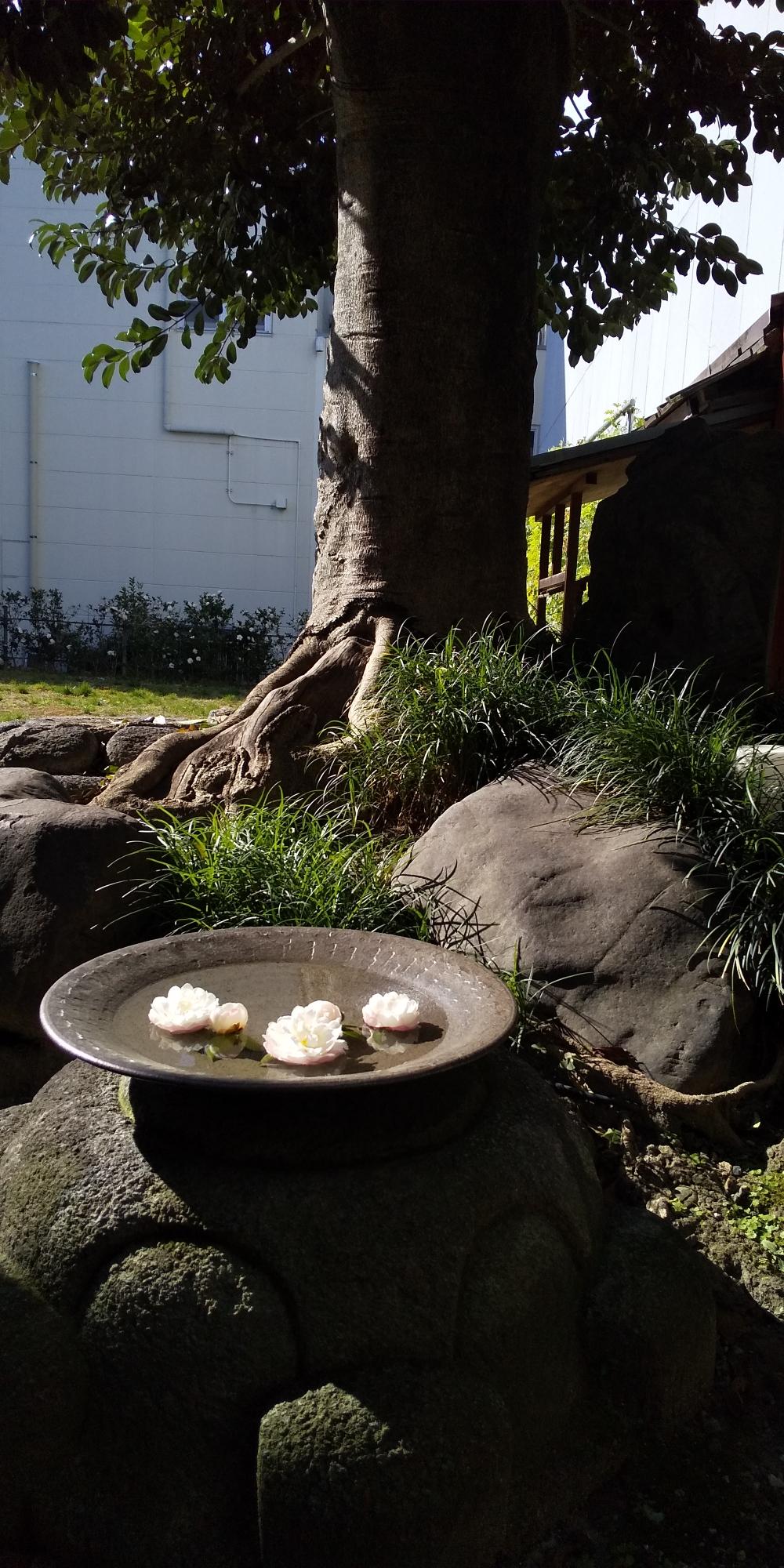 「きっさこ和束」の庭