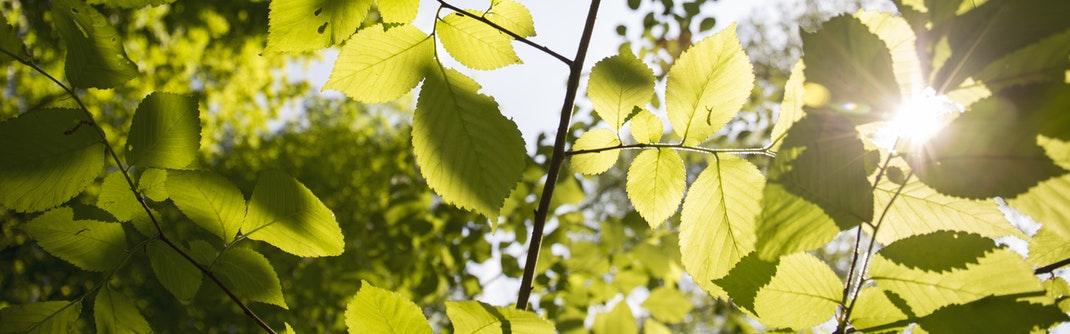Sonnenlicht fällt durch Bäume