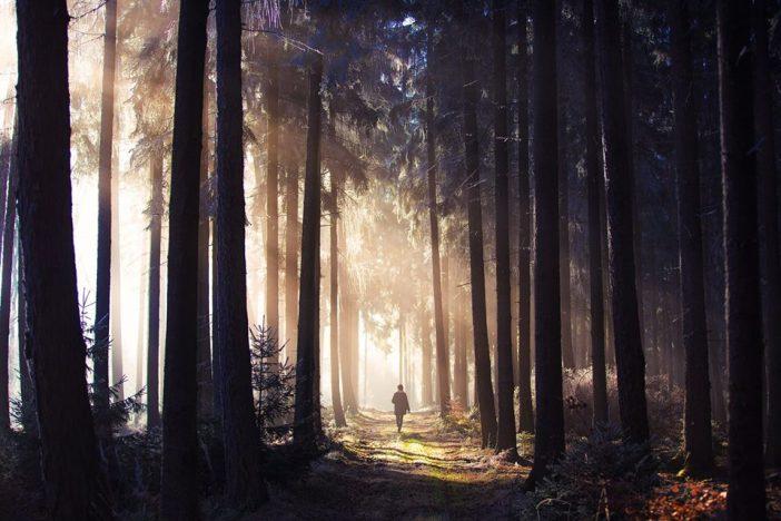 Auf dem Foto ist der Koblenzer Stadtwald zu sehen. Henry Tornow hat darin ein wundervolles Licht eingefangen, dass auf einen Waldweg fällt.