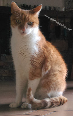 Tommy - Catsitting Püttlingen