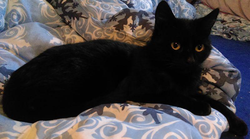 Tommy- mobile Katzenbetreuung - die Katzenfrau