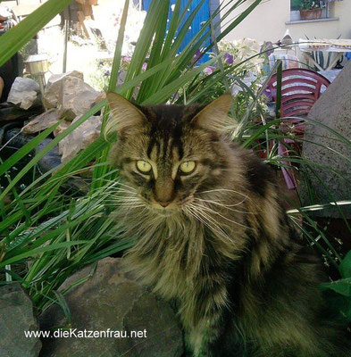 Sandy - mobile Katzenbetreuung Wadgassen