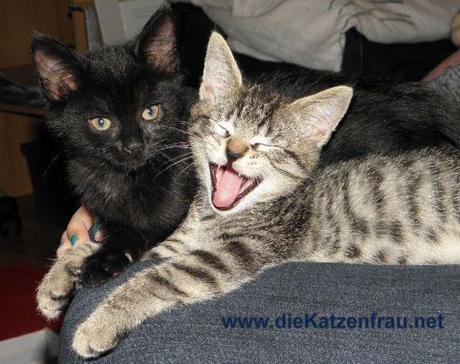 glückliche Ktzenkinder