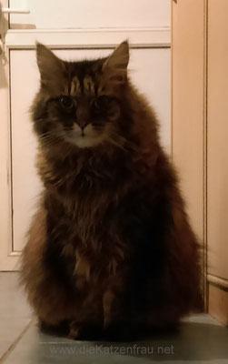 Gizmo - Catsitting Nalbach