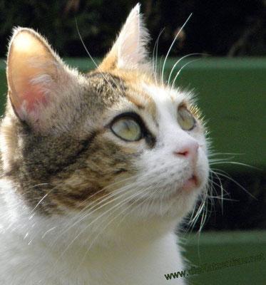 Sarah - Catsitting - die Katzenfrau