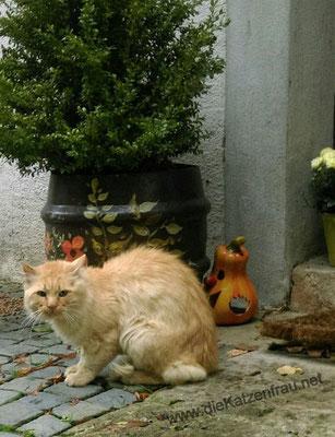 Serrano - mobile Katzenbetreuung - die Katzenfrau