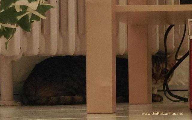 Pixie - Catsitting Saarbrücken