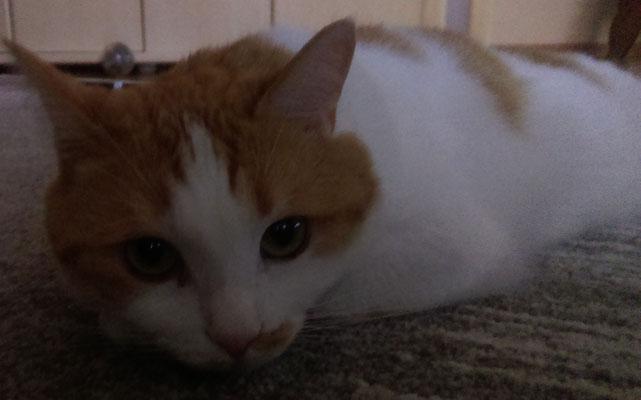 Baby Lennox - Catsitting Dillingen
