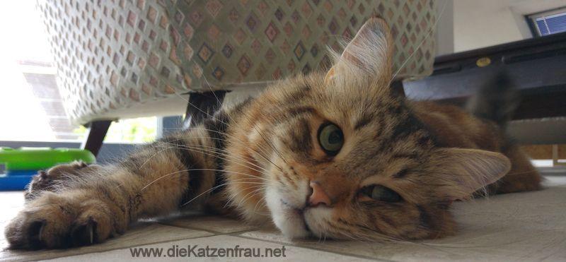 Falk-  Catsitting Rehlingen - Siersburg