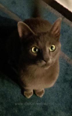 Mogli - mobile Katzenbetreuung Nalbach