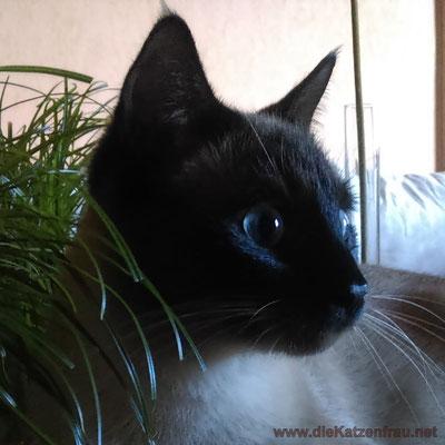 Luca - Catsitting Großrosseln