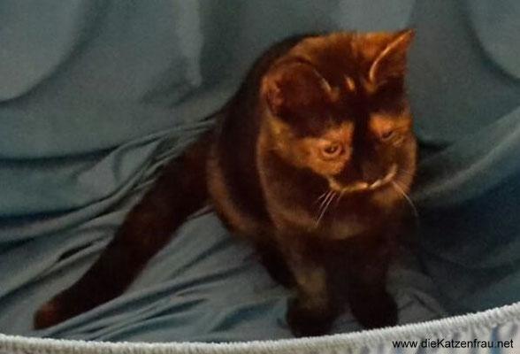 Penny & Paula - mobile Katzenbetreuung Völklingen