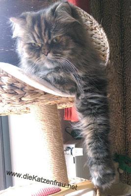 Fanny  - Catsitting Wadgassen
