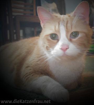 Sir Henry - Catsitting Wadgassen
