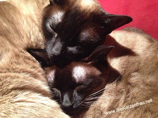 Jungs  - mobile Katzenbetreuung Dillingen