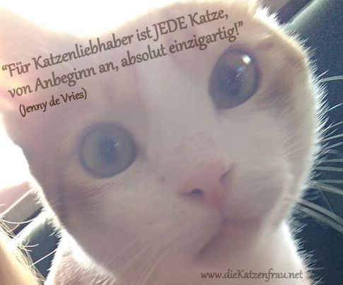 Catsitting -Mobile Tierbetreuung - Tiertaxi -die Katzenfrau
