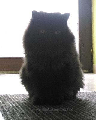 Paul - Catsitting Wadgassen