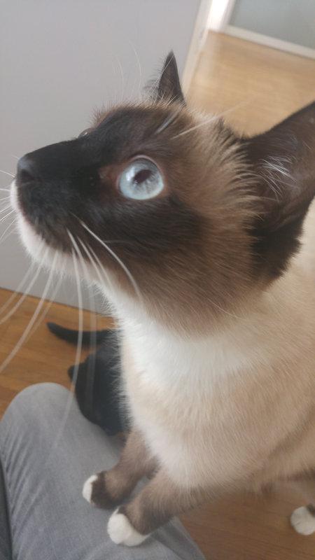 Max - mobile Katzenbetreuung Saarlouis