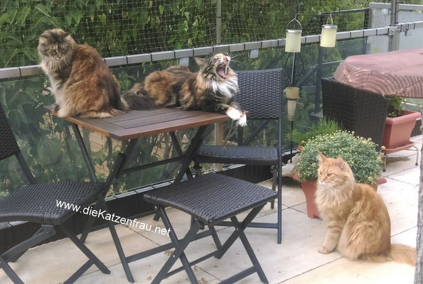Ein ganz toller Clan - mobile Katzenbetreuung Ludweiler