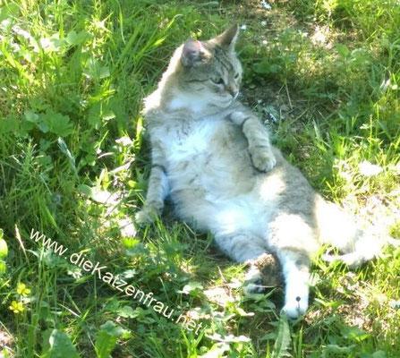 Leo - Catsitting - die Katzenfrau