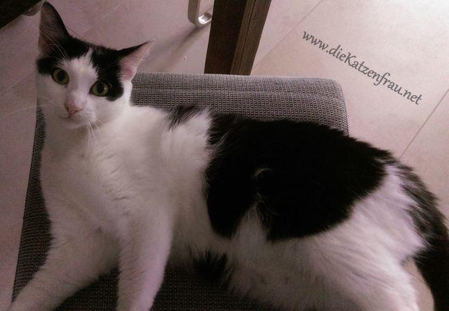 Catsitting Wadgassen