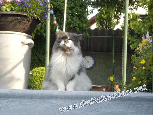 Perry - mobile Katzenbetreuung - die Katzenfrau