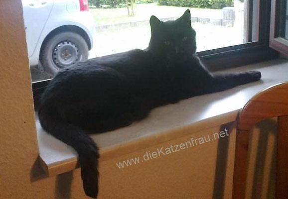 Charly - Catsitting Altenkessel