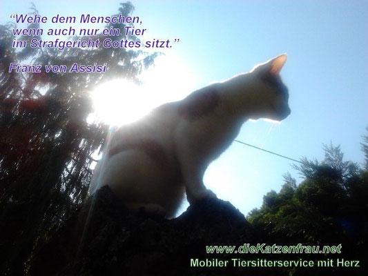 Catsitter mit Herz - Mobile Katzenbetreuung -Die Katzenfrau
