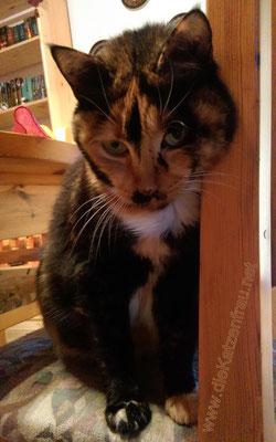 Sonnenschein Abby - mobile Katzenbetreuung - die Katzenfrau