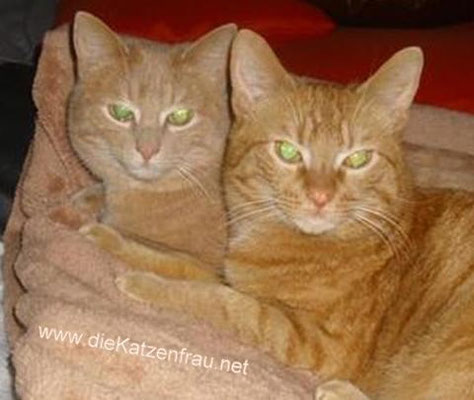 Ludweiler  - Catsitting Ludweiler